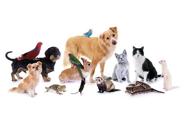 Arzt für Heimtiere