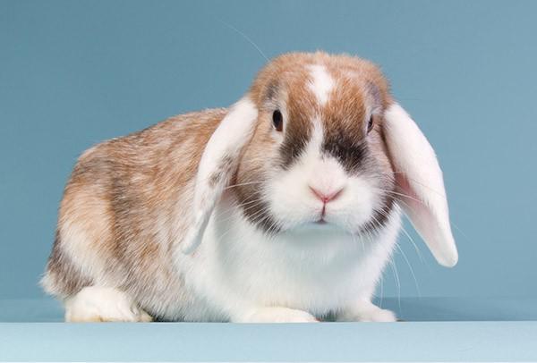 Arzt für Kaninchen - Kleintierklinik