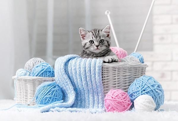 Tierarzt für Katzen - Kleintierklinik