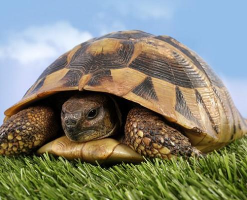 Tierpraxis für Reptilien - Kleintierklinik